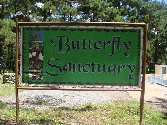 Butterfly Farm - Camp John Hay: butterfly sanctuary