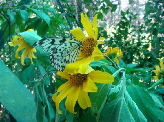 Butterfly Farm - Camp John Hay: butterfly
