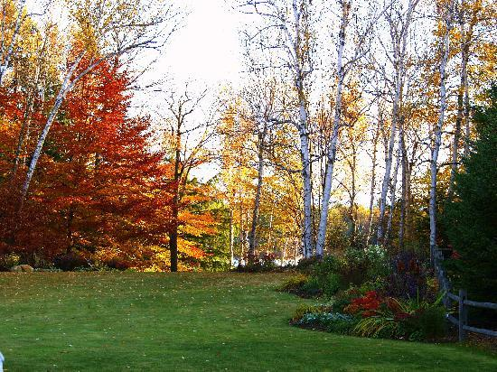 Fall foliage at Wilson Lake Inn