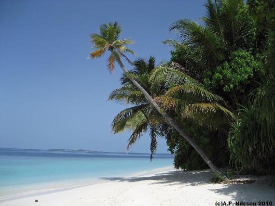Madoogali Tourist Resort: Madoogali palm trees.