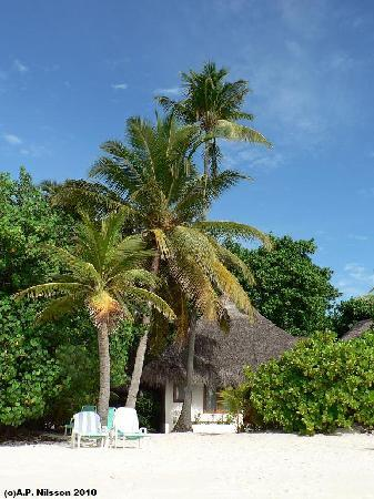 Madoogali Tourist Resort: Beach Bungalow and palm trees, Madoogali Island.