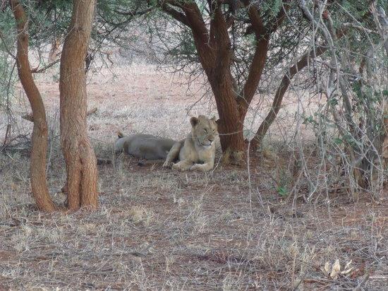 Wildlife Kenya Safaris - Day Trips: You looking at me