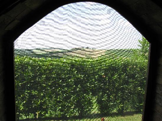 Agriturismo I Fuochi: Blick aus dem Fenster