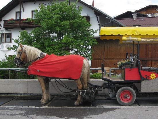 Seefeld in Tirol, Austria: Pretty Halflinger ponies