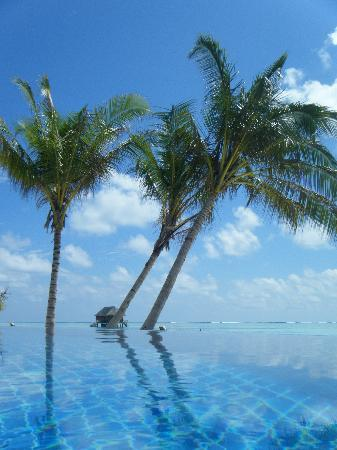 Meeru Island Resort & Spa: view from pool