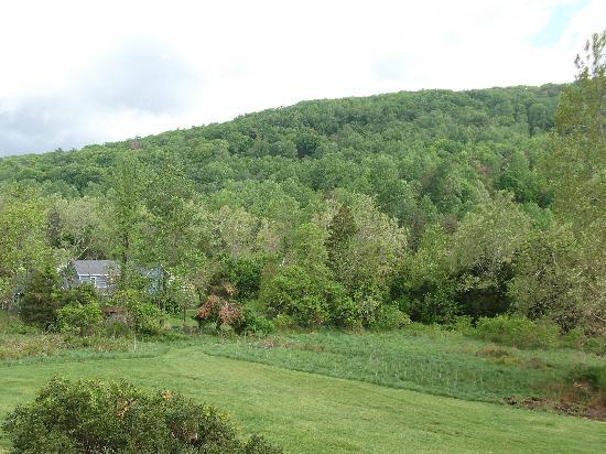 View from the back deck of the house