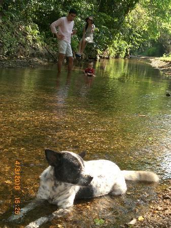 The Scenery Resort & Farm : The stream