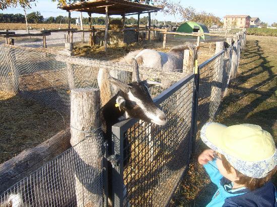 Agriturismo La Razza : Farm animals