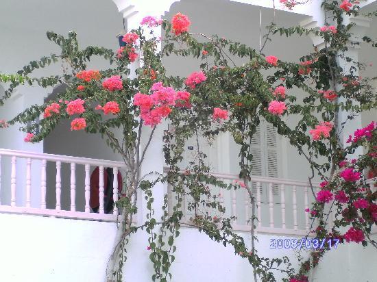 Hotel Rodes: Mysigt med alla blommor.