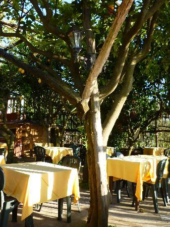 La Savardina: Under the Lemon Trees