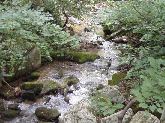 Mama Gertie's Hideaway Campground: Creek beside our cabin