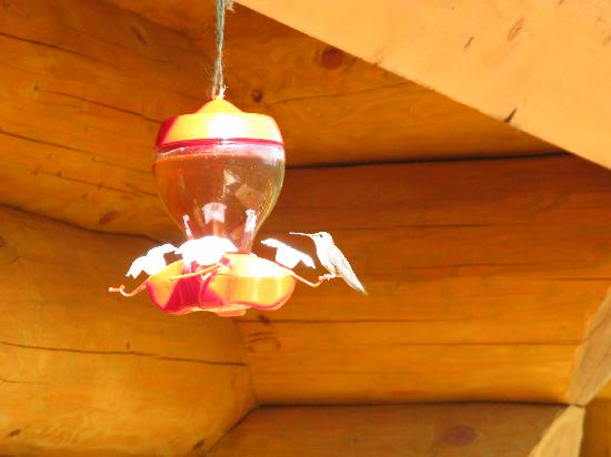 Clearwater Springs Ranch: Humming birds
