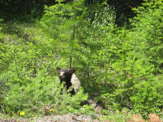 Clearwater Springs Ranch : bear cub seen whilst leaving the ranch
