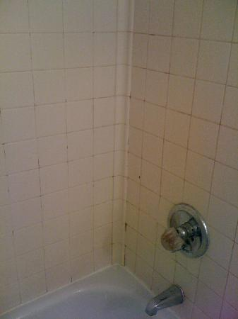 Great Lakes Inn & Suites: Moldy shower