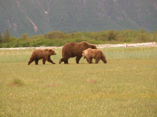 AK Adventures, Inc. - Day Tours: Mother and cubs