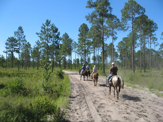 Horseback Riding Of Myrtle Beach : Beautiful morning ride in the Preserve