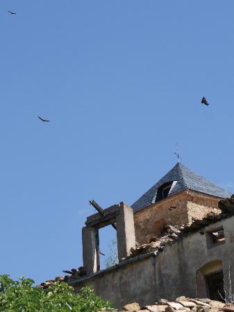 Casa Guilla: soaring birds