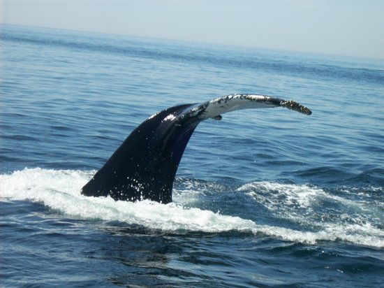 Granite State Whale Watch: Whale tail