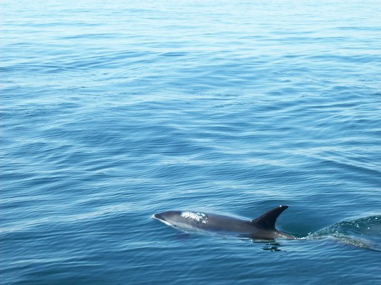 Rye, NH: dolphin