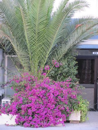 Larnaka City, Cyprus: bungavilea