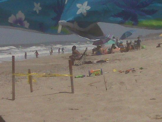 American Beach: Turtle Nest
