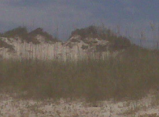 American Beach: Dune next to park
