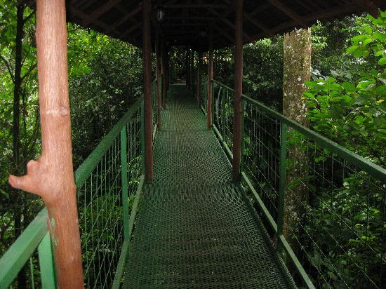 Fourtrax Adventure: Suspension bridge to La Fortuna Waterfall lookout point