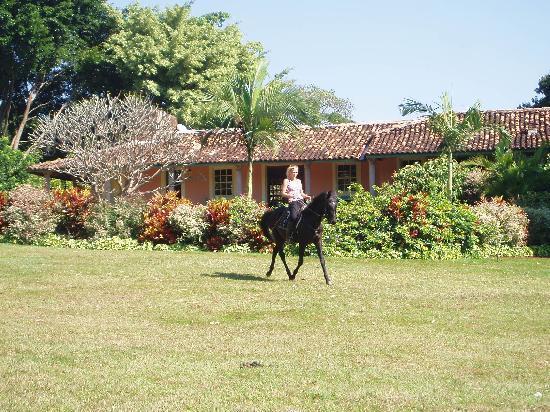 Fazenda Laranjal Guest Ranch: Damascou (3 year old Arabian stallion)