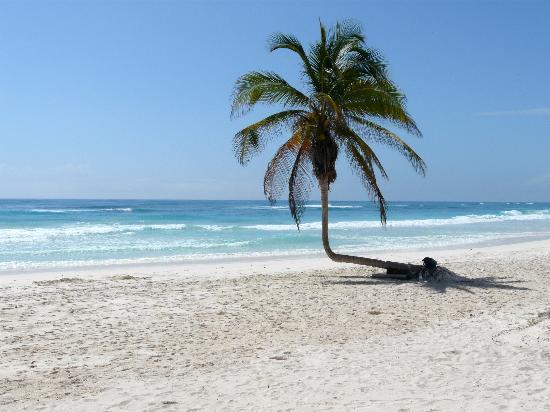 Don Diego de la Playa: la plage à 10m ....