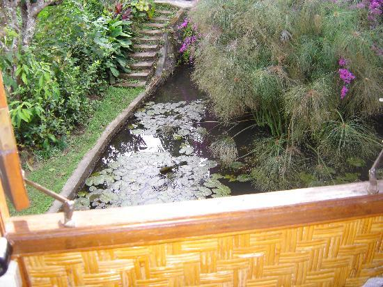 Puri Lumbung Cottages: view from balcony