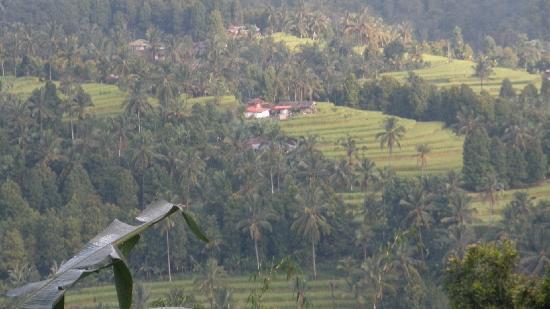 Karangsari Guest House: ricefields near Munduk