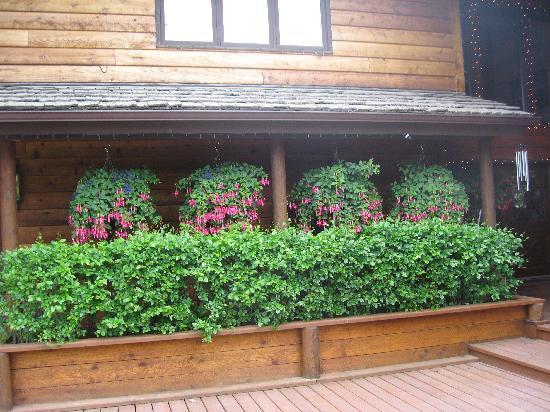 Alaskan Frontier Gardens Bed and Breakfast: Beautiful Fushias at Alaskan Frontier Gardens