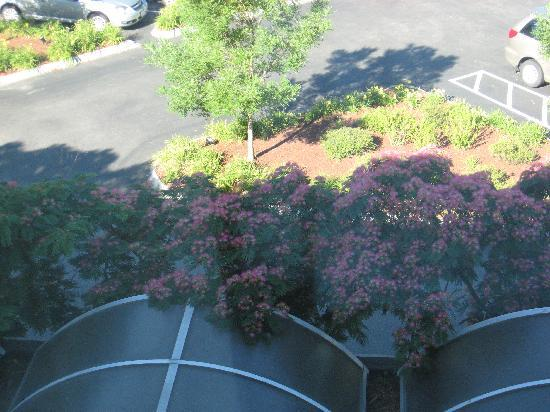 Freepoint Hotel: Des fleurs!