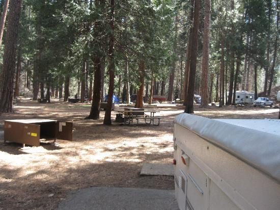 North Pines Campground: View of our campsite, # 213