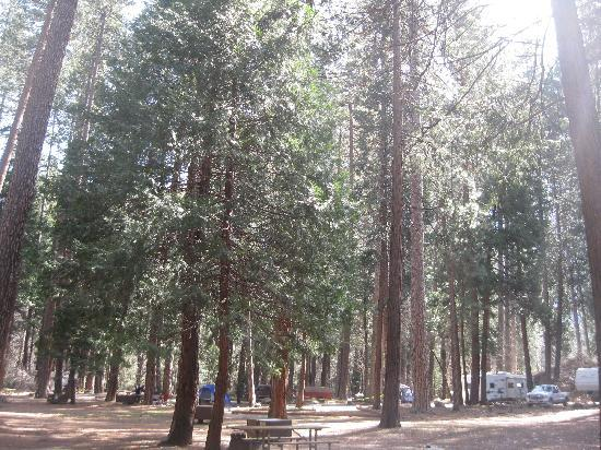 North Pines Campground: view of our trees in the campground