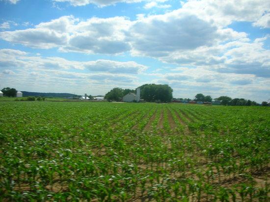 Paradise, Pensilvania: farm view