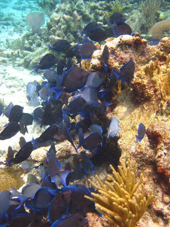 Dexter's Fantasea Tours: fish on reef