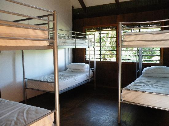 Treehouse Hostel: Typical Dorm