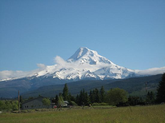 Vineyard View Bed & Breakfast: mount hood view from property on clear day