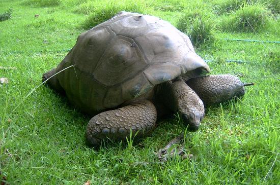 Sant'Elena: Jonathan the Tortoise