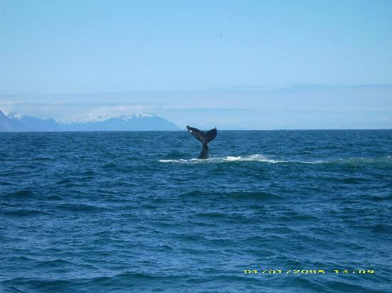 Alaska Redfish Lodge: kenia fjords glacier cruise the best