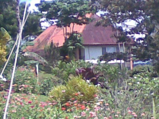 Penonome, Panamá: Esta fue la habitiacion en la que me hospede, foto tomada desde una vista del SPA.