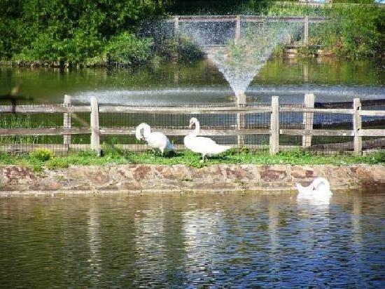 Birmingham Zoo: swan lake