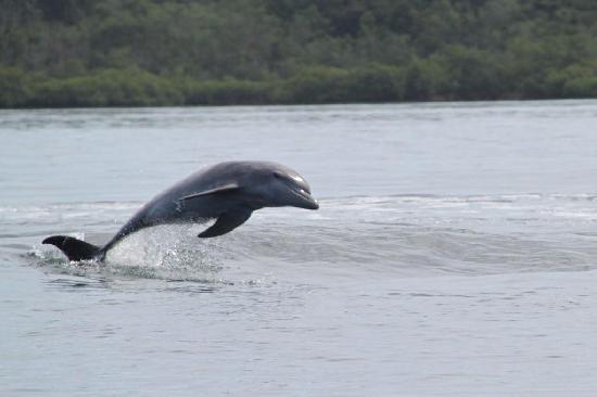 Bluff Beach, Panama: Dolphin
