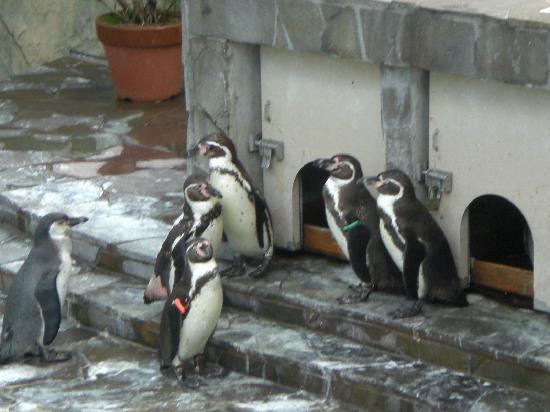 Fukuoka, Japan: フルボトルペンギン