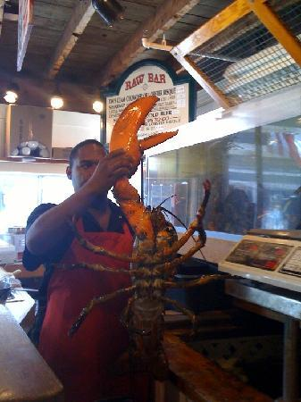 Cape Cod, MA: Biggest lobster we ever saw!