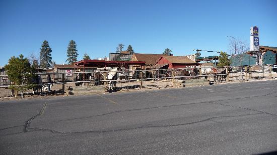Bryce View Lodge: Pferde
