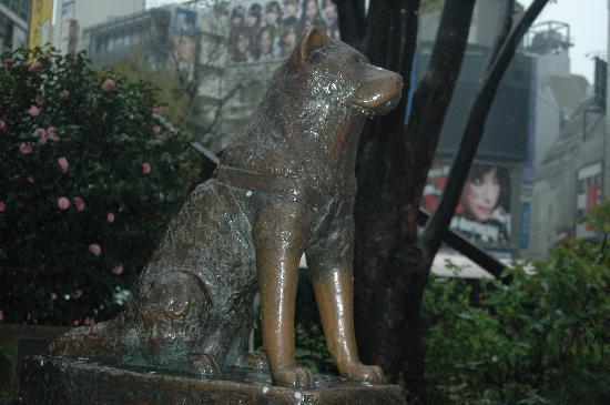 Statue of Hachiko(the loyal dog)- Shinjuku, Tokyo, Japan