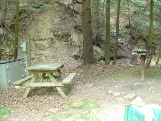 Evergreen Trails Campground : Picnic and BBQ