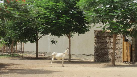 ACE- Animal Care in Egypt: Fulla